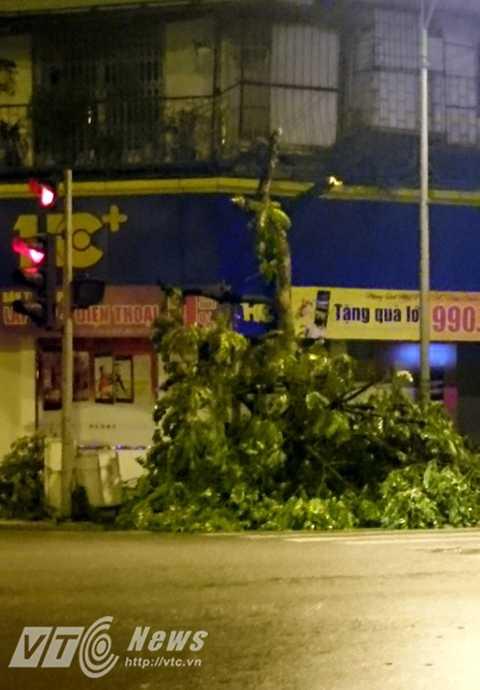 Kẻ gian ngang nhiên đốn hạ cây xanh trên con phố ở giữa trung tâm thủ đô
