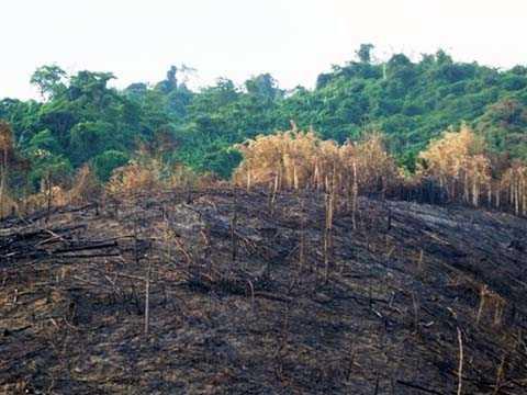 15ha rừng bị đốn hạ trong vòng một tháng