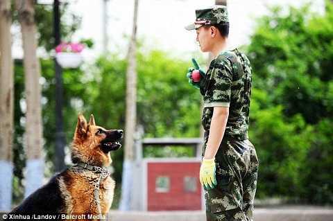 Một cảnh sát Trung Quốc huấn luyện chó trong một khoá học kéo dài 4 tháng