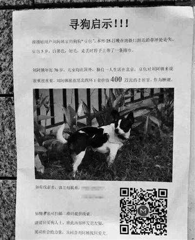 Thông báo treo thưởng 14 tỷ tìm chó lạc