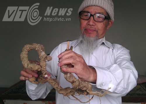 Dược sĩ Đào Kim Long và củ sâm Ngọc Linh nhiều năm tuổi
