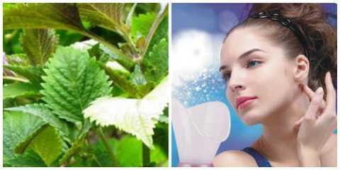Xông bằng lá tía tô giúp bạn trị sạch mụn cám, mụn bọc và đem lại làn da mịn, trắng ngần.