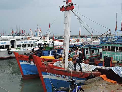 Tại Lý Sơn (Quảng Ngãi), tàu thuyền cũng tấp nập về đảo tránh bão - Ảnh: Bửu Lân