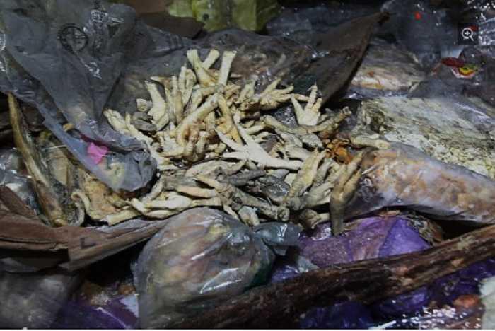 Cận cảnh một bọc chân gà đã mốc xanh, thối hỏng trong số 100.000 tấn thịt lậu đông lạnh vừa bị thu giữ.