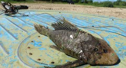 Hình ảnh thuỷ quái xuất hiện ở miền Bắc nước Nga