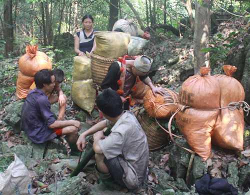 Người dân đổ xô vào rừng X. săn lùng thằn lằn đá