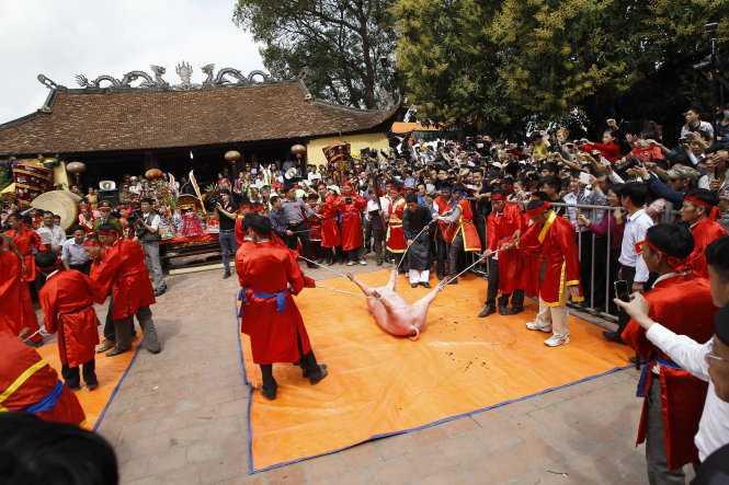 """""""Ông ỉn"""" được đưa ra giữa sân đình để khai đao tại lễ hội chém lợn ở Bắc Ninh năm 2015 - Ảnh: NG.KHÁNH"""