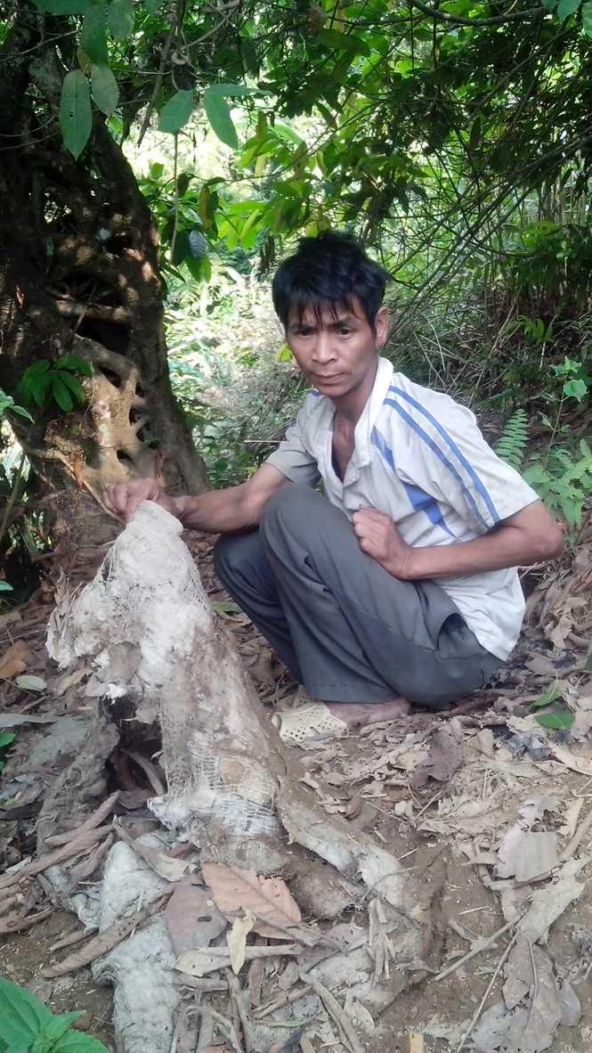 Người rừng A Tinh thường coi nơi này là chỗ nghỉ