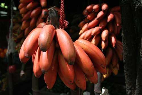 Giá một buồng chuối đỏ xuất xứ Australia được rao bán với giá 500.000-600.000 đồng.