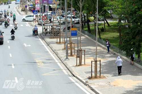 Hàng cây không có lá trên đường Nguyễn Chí Thanh (Ảnh: Việt Linh)
