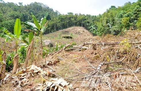 Khu vực xảy ra án mạng là đất nương của người dân canh tác, chủ yếu trồng quế và sắn