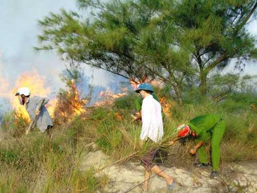 Cháy lớn ở rừng phòng hộ ven biển Bảo Ninh khiến hàng chục hecta rừng bị thiêu rụi