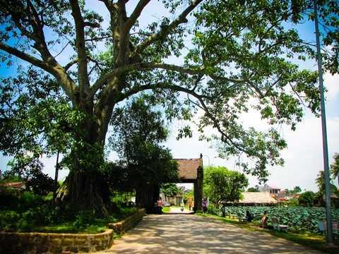 Cổng làng Đường Lâm với cây đa tỏa bóng mát