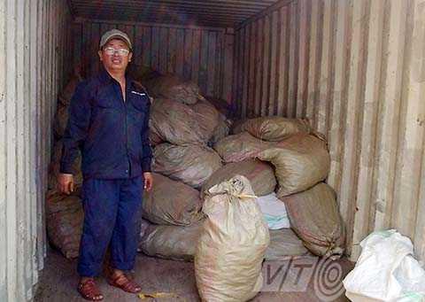 Lô hàng ngà voi và vảy tê tê được ngụy trang trong container đậu đỏ nhập về cảng Tiên Sa (Đà Nẵng) bị phát hiện