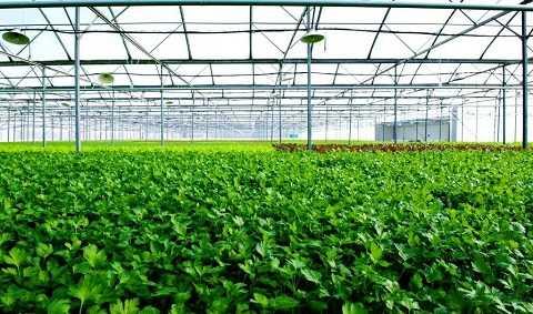 Nhà kính VinEco Tam Đảo sẽ sản xuất và cung ứng các loại rau mầm cũng như rau ăn lá - củ - quả theo tiêu chuẩn VIETGAP và GLOBALGAP với sản lượng 3.500 tấn/năm, được canh tác thân thiện với môi trường.
