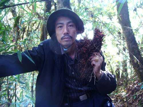 Anh Thanh và củ thuốc cực quý, chỉ có ở độ cao hơn 2.000m, đang bị Trung Quốc thu mua ráo riết.