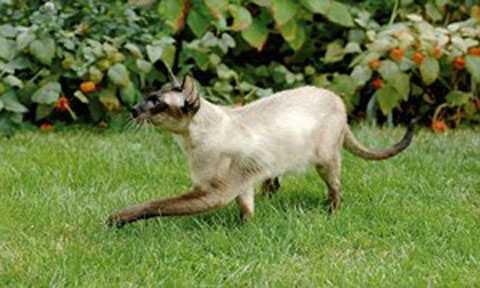 Hệ thống mã hóa wi-fi hotspot của người dùng đa phần đều có bảo mật kém do vậy một chuyên gia bảo mật đã dùng mèo để câu trộm wi-fi