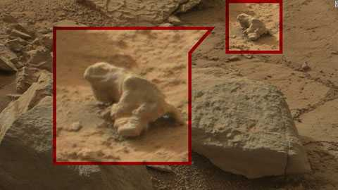 Một hòn đá bình thường nhưng lại mang hình dạng của một con kỳ nhông.