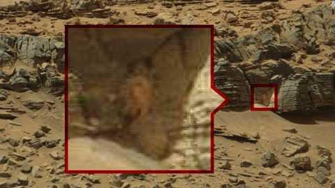 một động vật kỳ lạ đang núp trong một khe đá
