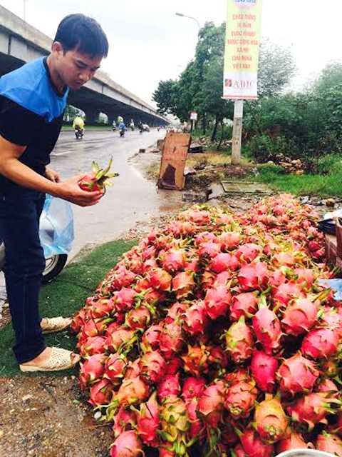 Thanh long 10.000 đồng/kg được đổ đống bán khắp vỉa hè Hà Nội
