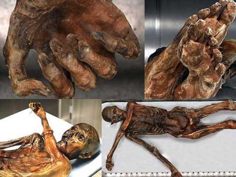 Các bộ phận của xác ướp được tìm thấy