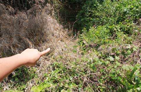 Vị trí chôn xác cô gái Vũ Thị L.