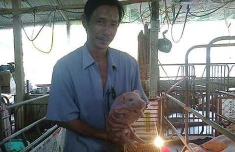 Anh Phương cho đàn lợn nghe nhạc để tăng chất lượng thịt, dễ đậu thai