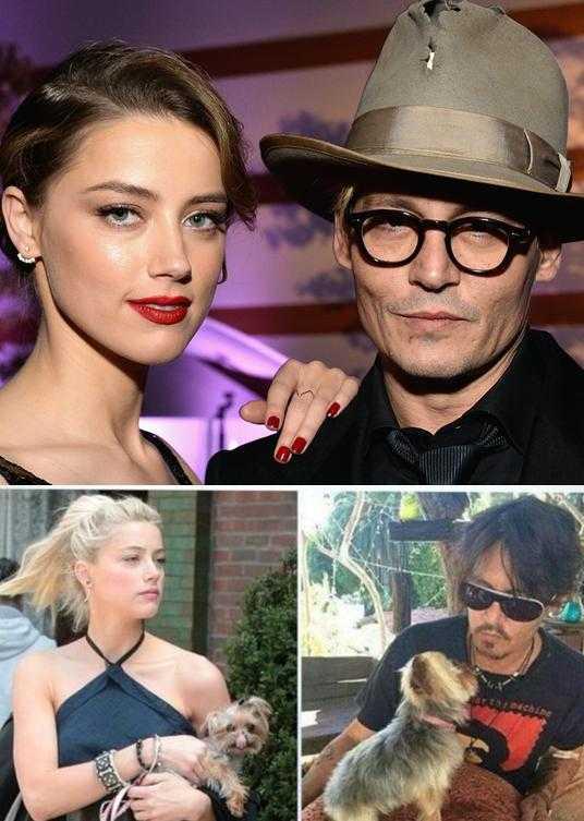 Vợ chồng Johnny Depp và Amber Heard cùng vụ án buôn lậu chó