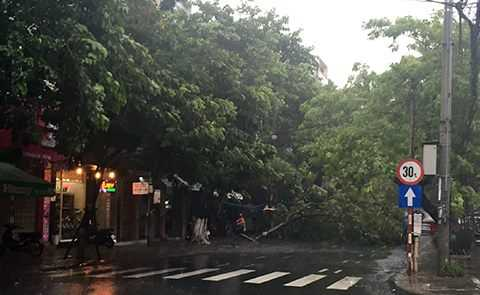 Nhiều cây cối bật gốc do mưa lớn tại Đà Nẵng.