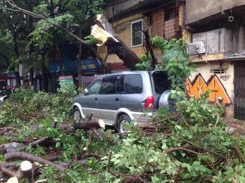 Cây đổ đè bẹp ô tô trên đường Trần Quang Khải, quận Hoàn Kiếm. Ảnh: TTXVN