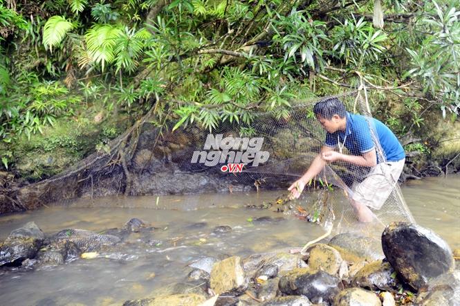 Mỗi đoạn suối cách vài trăm mét được giăng lưới đón cá trôi vào