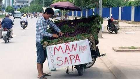 Mận tím Sapa vẫn được bày bán tràn lan tại Hà Nội mặc dù đã hết mùa cách đây gần 2 tháng.