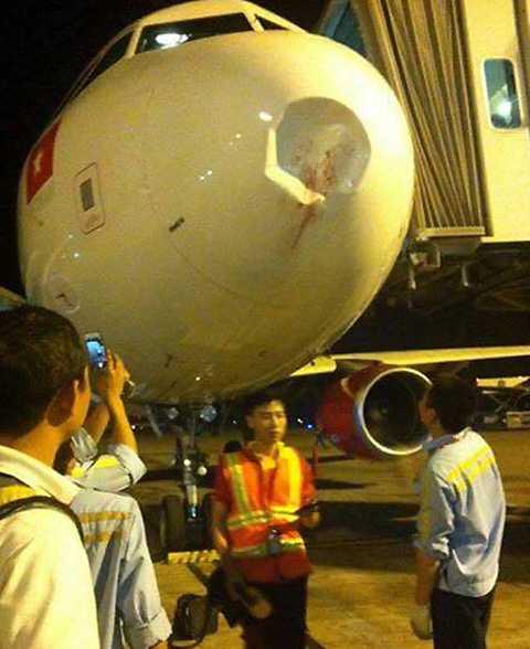 Máy bay bị chim đâm móp đầu. Ảnh: Việt Anh