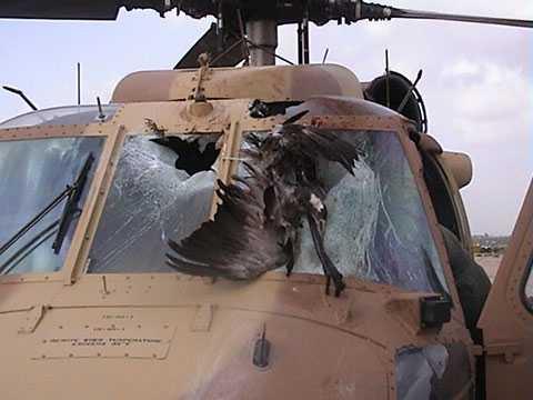 Một trực thăng Black Hawk hư hại do đâm phải một con sếu