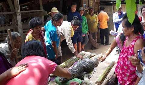 Sinh vật kỳ lạ xuất hiện ở Thái Lan