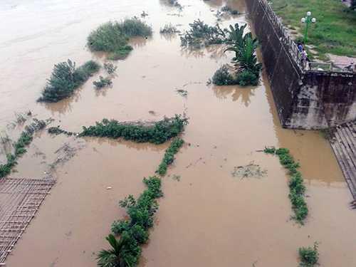 Một vườn rau của người dân bị nước lũ nhấn chìm - Ảnh: Hồng Thảo
