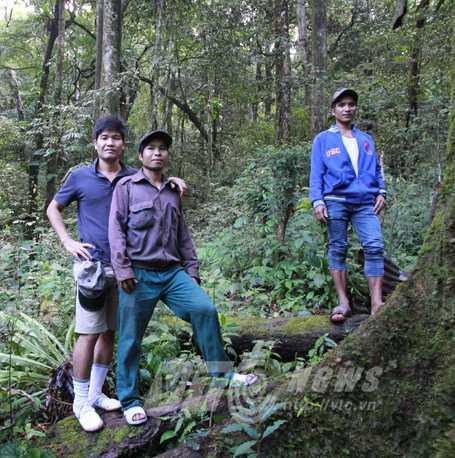Bảo vệ vườn sâm trong rừng