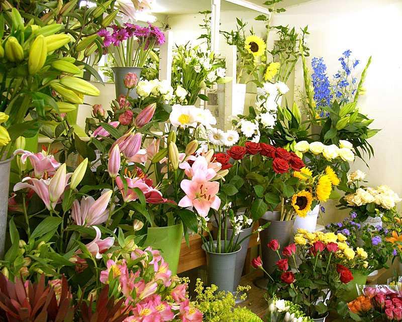 Hoa tươi đang phải cạnh tranh với nhiều loại hoa khác có giá cả tương tự hoặc rẻ hơn, nhưng mẫu mã lại đẹp và bền hơn rất nhiều