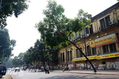 Cây xanh đang trong tình trạng đổ nghiêng đoạn qua số nhà 38 đường Yên Phụ