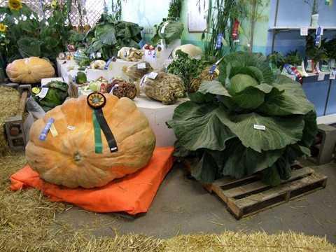 Rau, củ, quả khổng lồ được trưng bày tại Hội chợ Nông nghiệp bang Alaska được tổ chức thường niên.