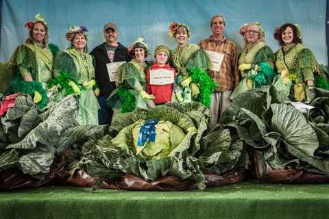 Những cây bắp cải khổng lồ có thể khiến nhiều người trên thế giới kinh ngạc, song không có gì đáng ngạc nhiên đối với nông dân Alaska.
