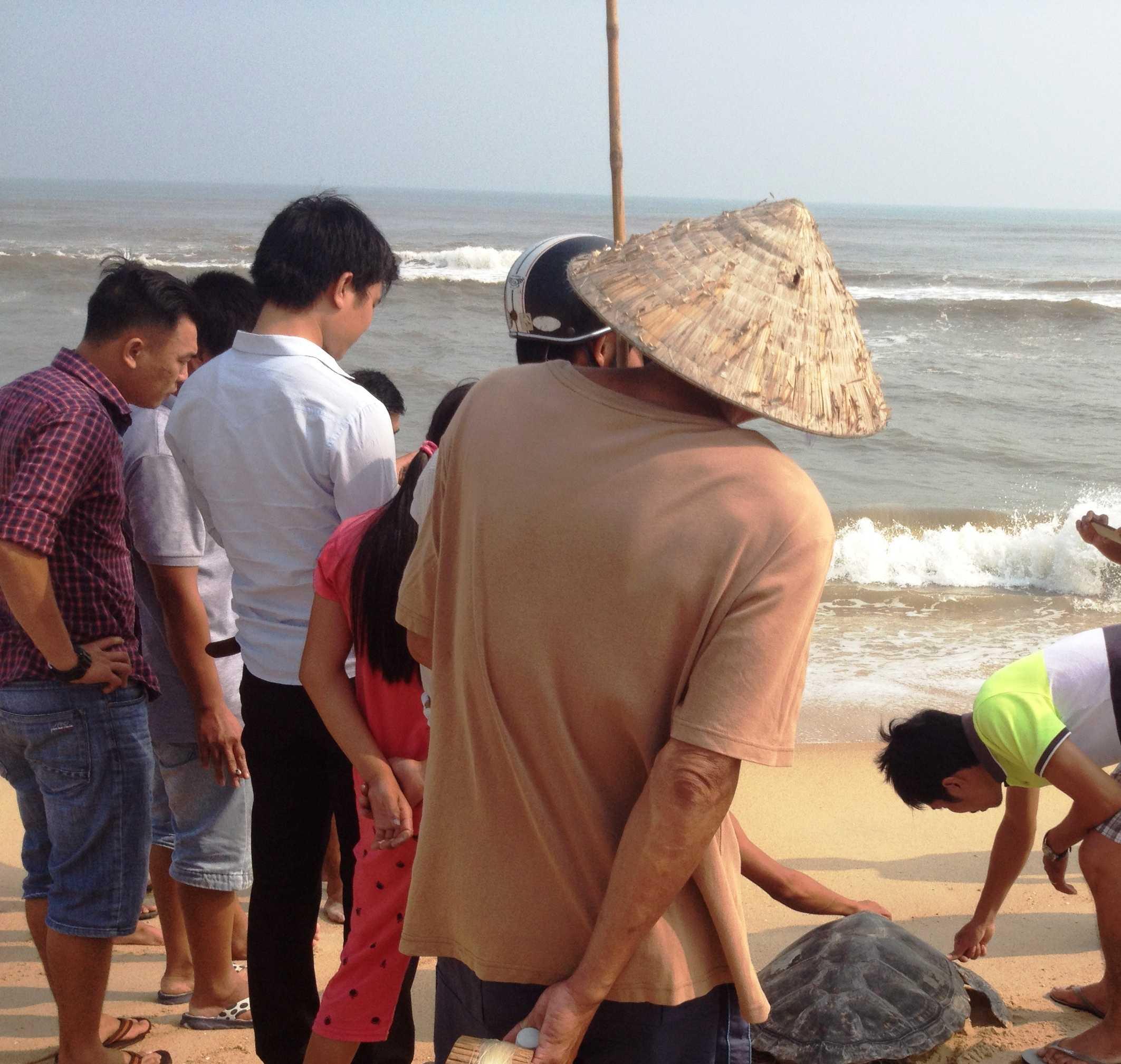 Cá thể rùa biển quý hiếm được chính quyền, nhân dân thả vể biển (Ảnh: Chi cục khai thác và bảo vệ nguồn lợi thủy sản Thừa Thiên - Huế)