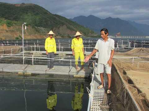Lồng cá tầm chuẩn bị sinh sản của Công ty TNHH một thành viên Cá tầm Việt Nam-Sơn La trên lòng hồ Thủy điện Sơn La (ở huyện Mường La) có hàng ngàn con sắp cho khai thác trứng, mỗi con có trọng lượng từ 15kg trở lên. Ảnh: K.T