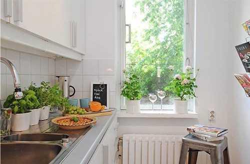 Cách trồng cây xanh phong thuỷ cho căn nhà của bạn