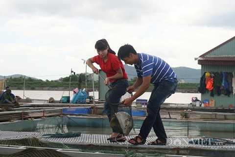 Nguyễn Thế Phước đang bắt cá chép giòn.