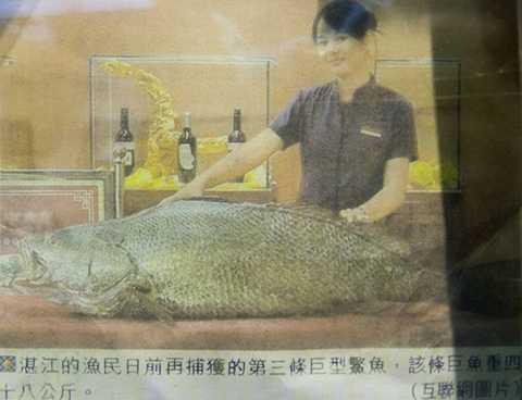 Trọng lượng cá trung bình loài cá này khoảng 135 kg. Chiều dài tối đa có thể lên tới 160 cm.