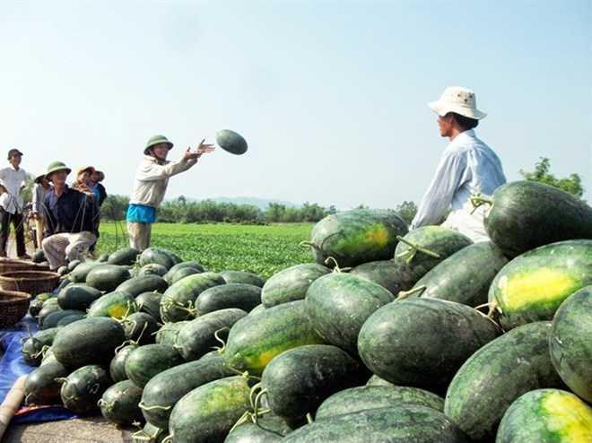 Nông sản Việt Nam gặp khó trong nhiều năm nay
