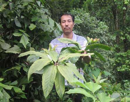 Lương y Thanh bên cây thất diệp nhất chi hoa mà anh trồng đã 7 năm