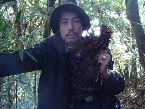 Củ sâm do lương y Thanh trồng