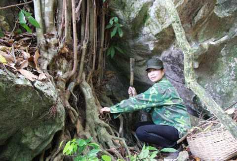 Chị Minh lấy thuốc trong rừng
